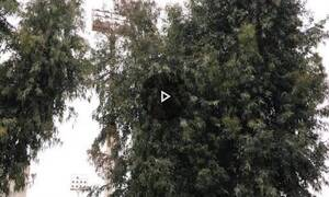 Τι απίστευτο κρύβουν αυτά τα δέντρα στη Χαλκίδα;