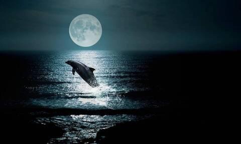 Απίστευτες εικόνες: Δελφίνια «λάμπουν» το βράδυ στη θάλασσα (video)