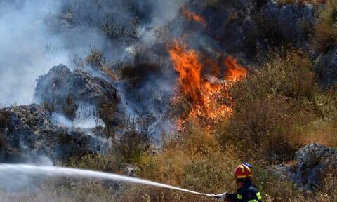 Συναγερμός στη Φθιώτιδα: Ανεξέλεγκτη πυρκαγιά σε περιοχή της Λοκρίδας