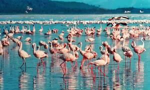 Εντυπωσιακές εικόνες: Επιδρομή ροζ φλαμίνγκο στο Μουμπάι (vid)