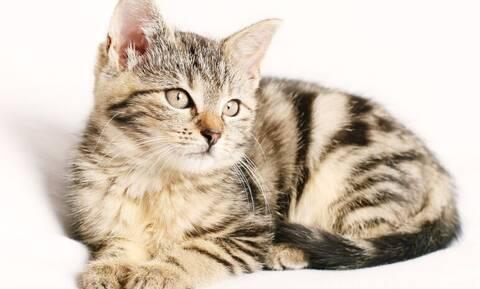 Γαλλία: Γάτος βγήκε θετικός στον κορονοϊό
