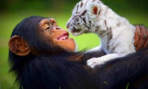 Σπάνιες φωτογραφίες από ζώα που θα σε κάνουν να χαμογελάσεις