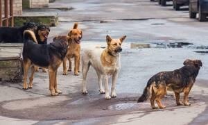Ηράκλειο: Στο νοσοκομείο 63χρονος που δέχτηκε επίθεση από αδέσποτα σκυλιά