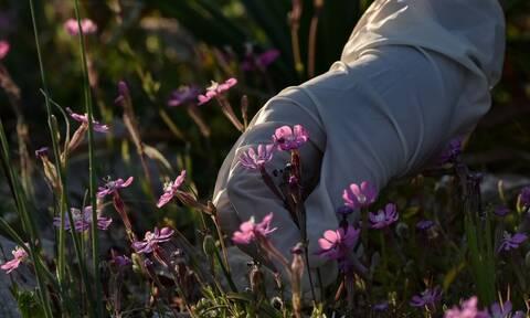 Κορονοϊός: «Καμπανάκι» από Ελληνίδα καθηγήτρια για τα γάντια