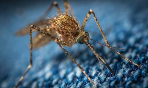 Κορονοϊός: Μεταδίδεται από τα κουνούπια; - Η απάντηση Τσιόδρα