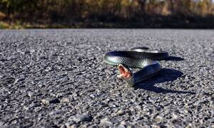 Φρίκη! Οδηγούσε την μηχανή του και βρέθηκε μπροστά σε ένα φίδι – Δεν φαντάζεστε τη συνέχεια (pics)