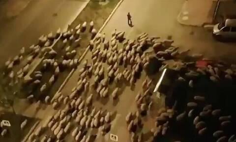 Η κάθοδος των... προβάτων: Εισβολή εκατοντάδων ζώων σε τουρκική πόλη εν μέσω lockdown