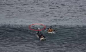Καρχαρίας επιτέθηκε σε σέρφερ - Δεν φαντάζεστε πώς γλίτωσε (vid)