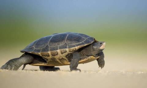 Πήγε να ταΐσει μία χελώνα - Αυτό που ακολούθησε δεν το περίμενε! (vid)