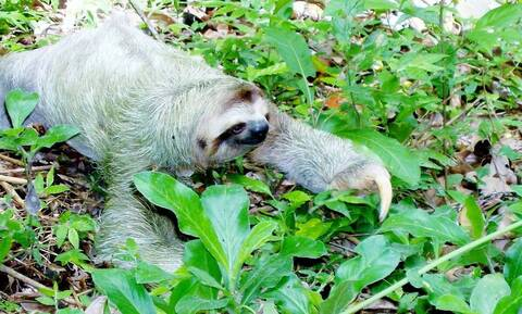 Απίστευτη ανακάλυψη: Βρήκαν απολίθωμα γιγάντιου ζώου (vid)