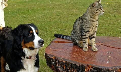 Κορονοϊός Ολλανδία: Ένας σκύλος και τρεις γάτες προσβλήθηκαν από τον νέο κορονοϊό