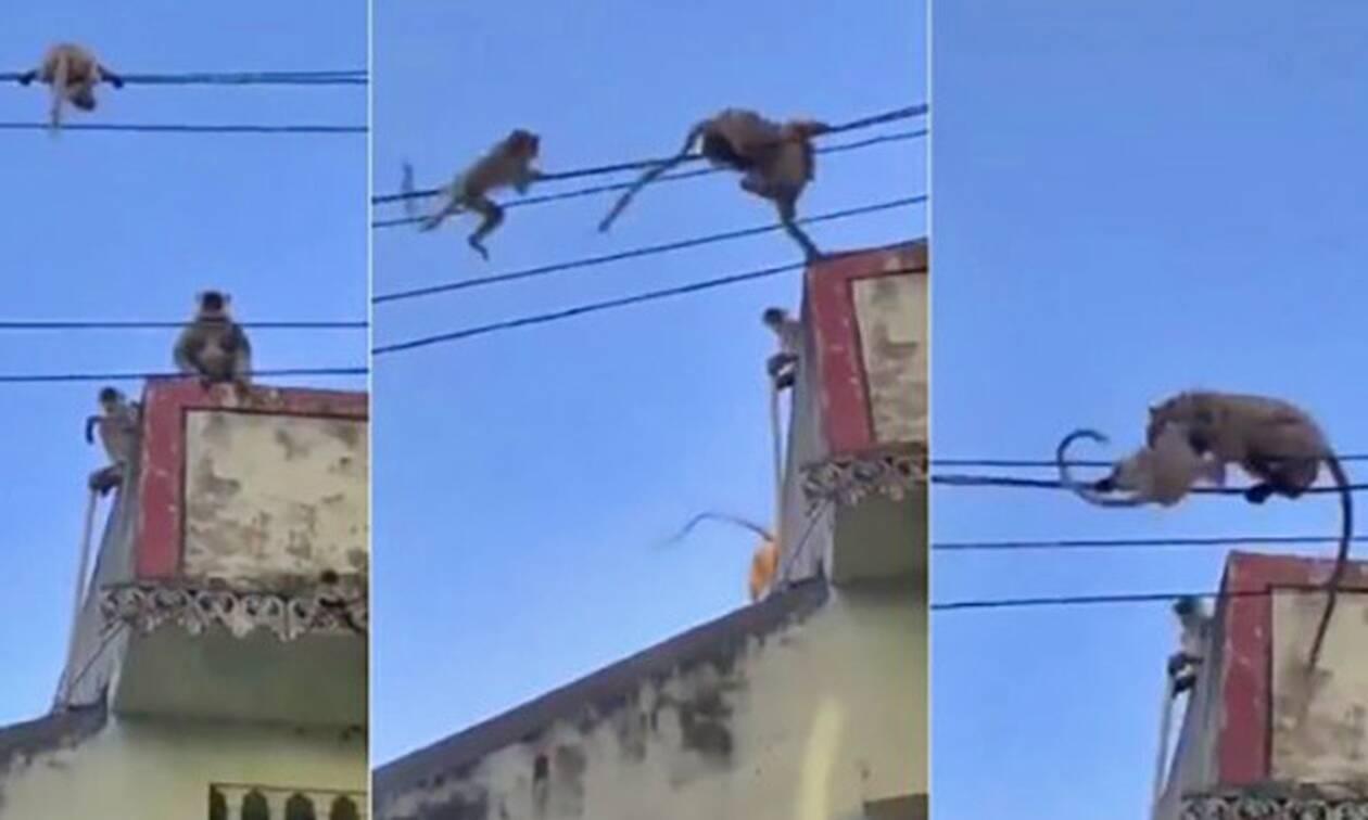 Μαϊμού «ήρωας» σώζει το παιδί της από σίγουρη πτώση στο κενό! (vid)
