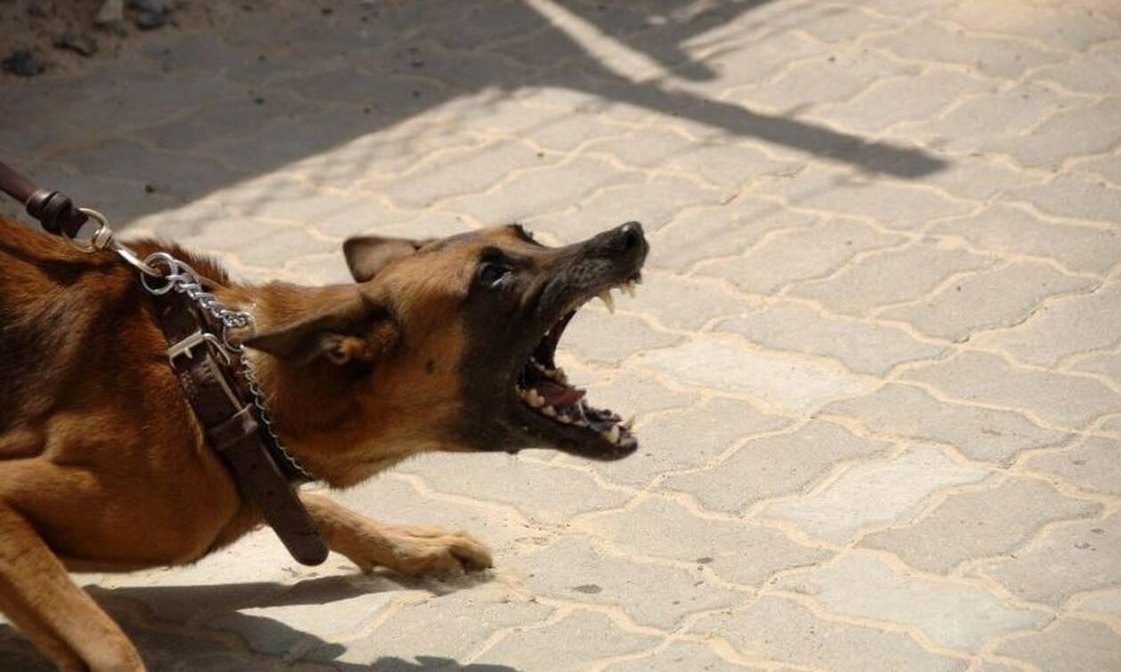 ΣOK: Πασίγνωστο μοντέλο παραμορφώθηκε από επίθεση σκύλου (Σκληρές εικόνες)