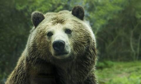 Ο ανόητος της χρονιάς: Προσπάθησε να πνίξει αρκούδα στο νερό - Δείτε πώς κατέληξε