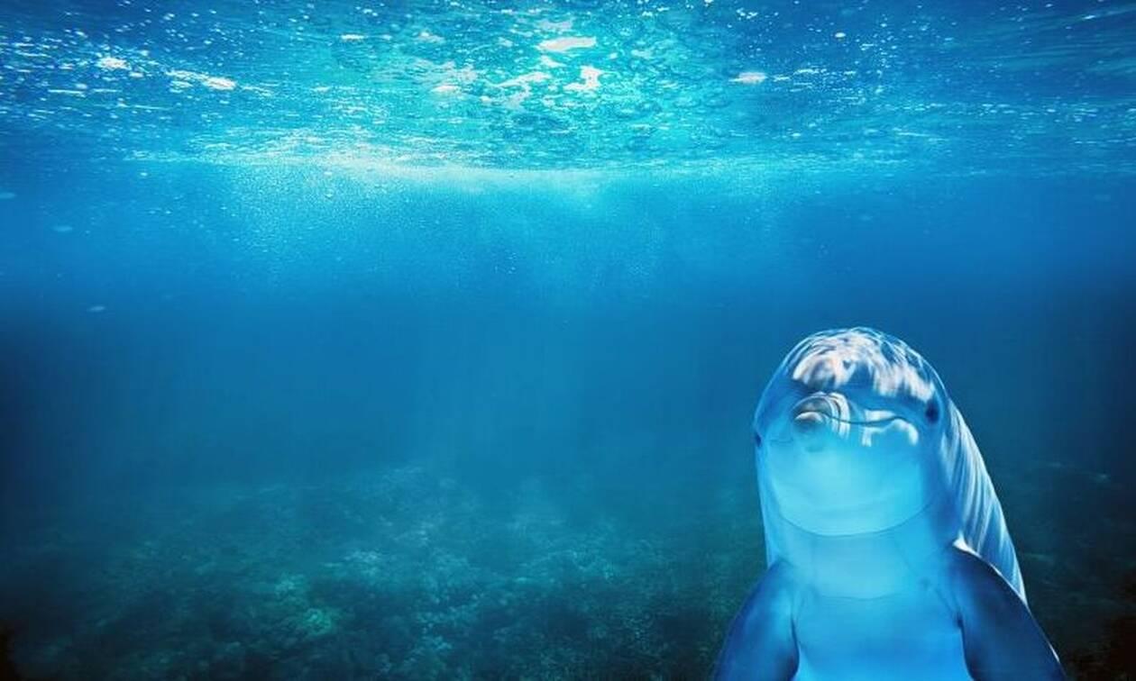 Συγκλονιστικό: Δείτε τι κάνουν τα δελφίνια εν μέσω καραντίνας (pics)