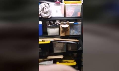 Άκουσε περίεργο θόρυβο στην αποθήκη - «Πάγωσε» μόλις είδε τι ήταν! (vid)