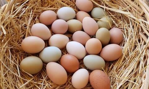 Πήγε στο κοτέτσι και έμεινε άφωνος - Τι χρώμα είχαν τα αβγά; (pics)