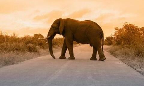 Τσάντισαν ελέφαντα και βρήκαν τον μπελά τους - Δείτε τι τους έκανε