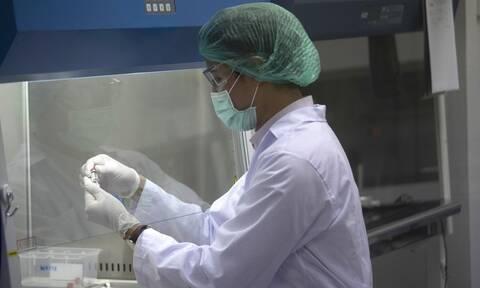 Κορονοϊός: Στα ποντίκια η λύση του γρίφου; Έμβρυο κατά 4% ανθρώπινο δημιούργησαν οι επιστήμονες