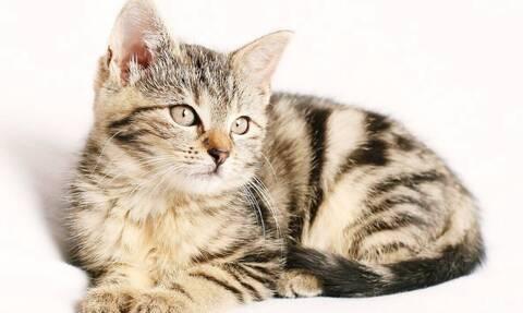 Μεγάλη μάχη - Γάτα προσπαθεί να πιάσει φίδι - Δεν φαντάζεστε τι έγινε μετά (vid)