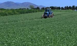 Ρύθμιση για να μην χάνουν το επίδομα ανεργίας όσοι εργάζονται περιστασιακά σε αγροτικές δουλειές
