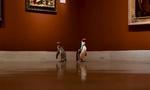 Άφησαν ελεύθερους τρεις πιγκουίνους σε ένα μουσείο - Το αποτέλεσμα συναρπάζει! (video)