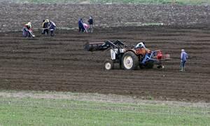 Απασχόληση ανέργων σε αγροτικές εργασίες με διατήρηση του επιδόματος ανεργίας