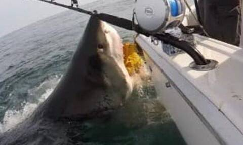 Ψαράς έρχεται μούρη με μούρη με λευκό καρχαρία! (video)