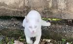 Απίστευτες εικόνες - Γάτα περνάει τον φράχτη και γλυτώνει από... θαύμα (pics+vid)