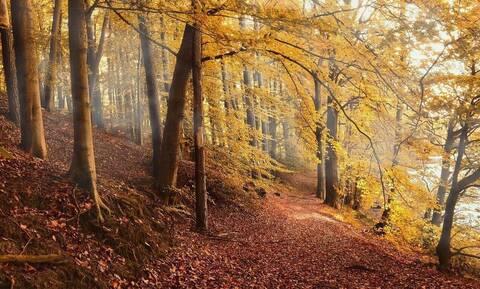 Έβγαλε βόλτα τον σκύλο του - Δεν φανταζόταν τι θα συναντούσε στο βουνό (vid)
