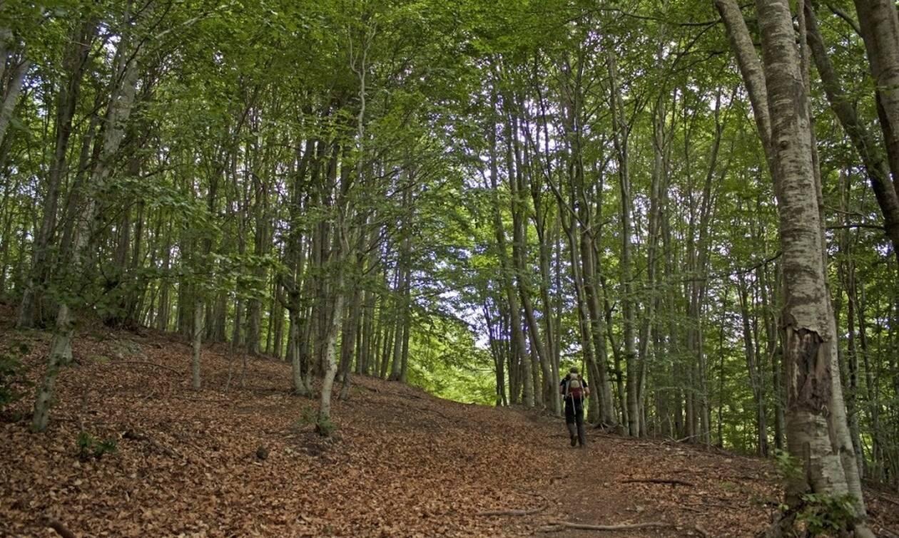 Πήγαν βόλτα στο δάσος μετά την καραντίνα - Δείτε τι έπαθε 4χρονος (pics)