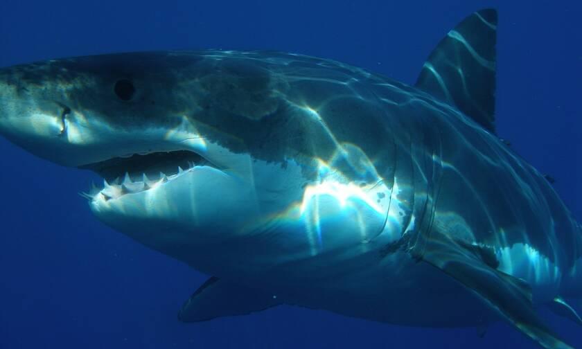Βίντεο που «κόβει» την ανάσα: Καρχαρίας έξι μέτρων πλησιάζει σκάφος