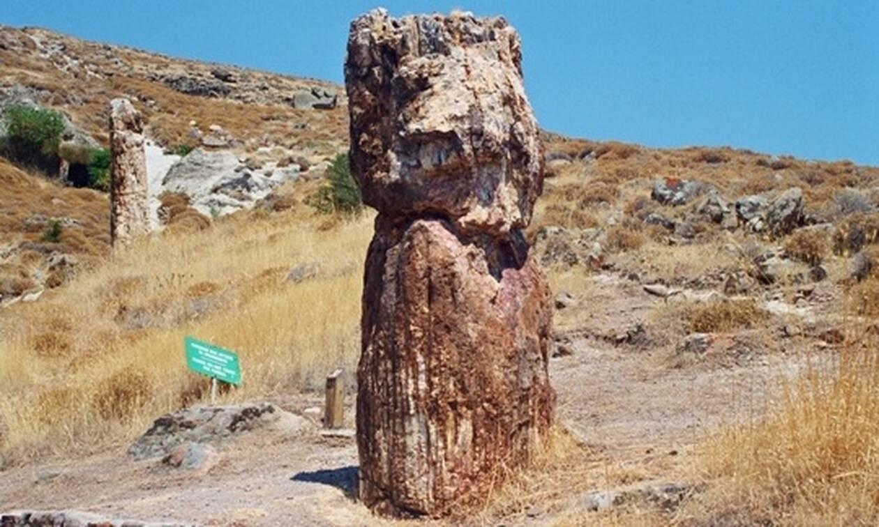 Αγνωστες ομορφιές της Ελλάδας - Μαγευτικές εικόνες από το απολιθωμένο δάσος στη Μυτιλήνη