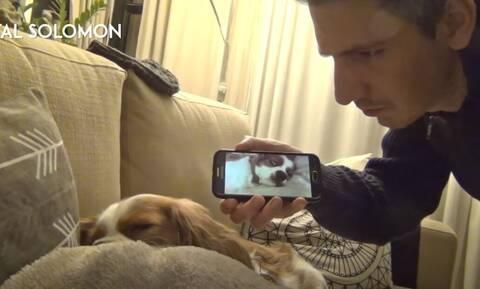 Βίντεο: Σκύλος ακούει για πρώτη φορά το ροχαλητό του και η αντίδρασή του γίνεται viral