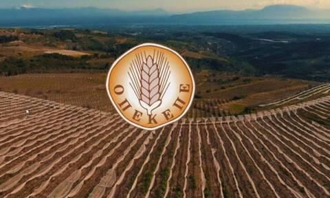 ΟΠΕΚΕΠΕ: Νέα πληρωμή 5,2 εκατ. ευρώ σε δικαιούχους αγρότες σήμερα