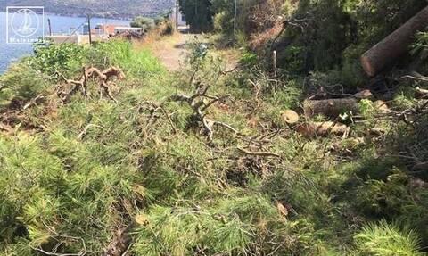 Αμφιλοχία: Πεύκα καταπλάκωσαν σπίτι - Σώθηκαν από θαύμα (pics)