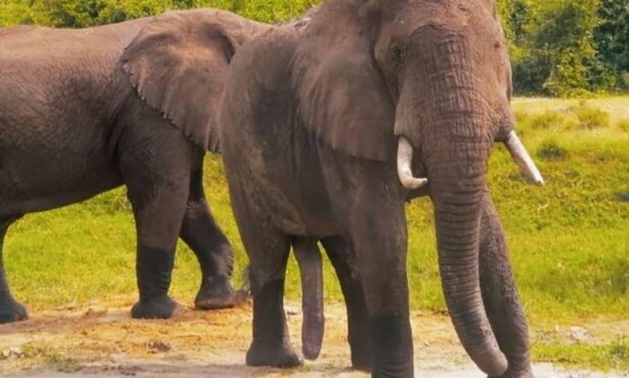 Κοιτάξτε καλά: Βλέπετε κάτι περίεργο στα πόδια του ελέφαντα;
