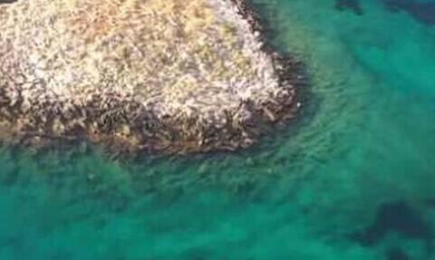 Ένα νησάκι-μύθος μόλις 100 μέτρα από την Αττική! (pics+vids)