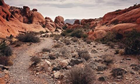 Έκανε πεζοπορία στην έρημο - Δεν πίστευε αυτό που ήταν δίπλα του (vid)