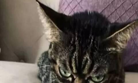 Τρομακτική: Η πιο νευριασμένη γάτα του κόσμου