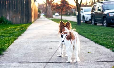 Έβγαλε τον σκύλο βόλτα – «Πάγωσε» με αυτό το πλάσμα που αντίκρισε στο δρόμο