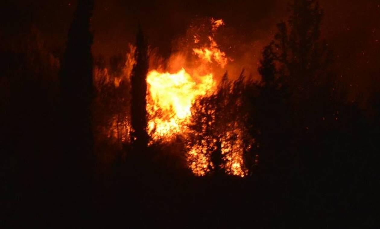 Ολονύχτια μάχη με τις φλόγες φωτιά στη Ζάκυνθο - Υποψίες για εμπρησμό