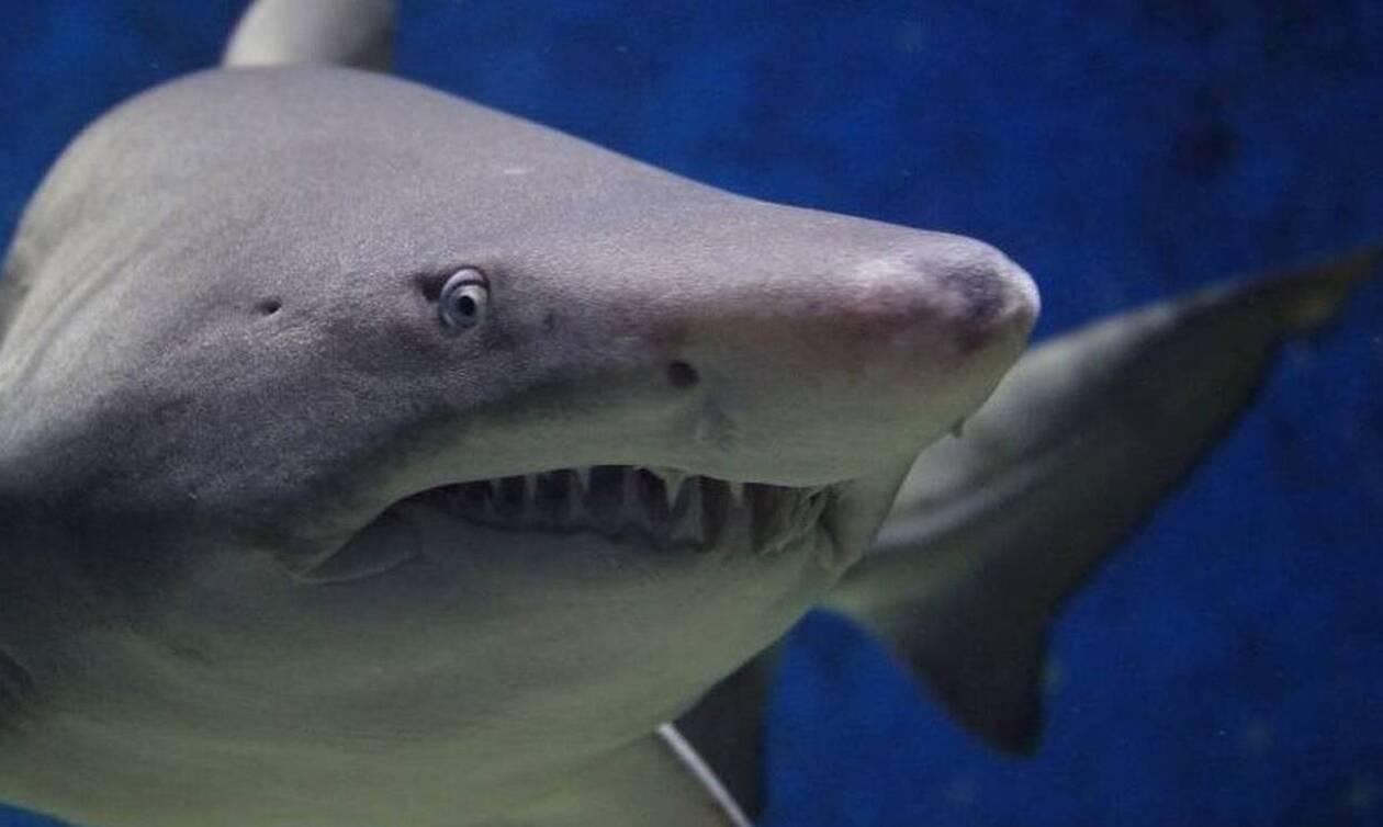 Τραγωδία: Καρχαρίας κατασπάραξε σέρφερ
