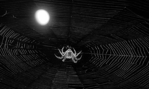 Είδε αράχνη στον υπολογιστή του - Δεν φαντάζεστε τι έκανε μετά (vid)