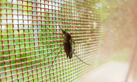 Μυστήριο: Γιατί αυτό το χωριό δεν έχει ούτε ένα… κουνούπι (pics)