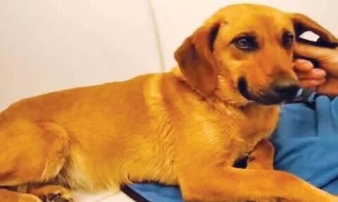 Φρίκη: Διεστραμμένος 85χρονος ασελγούσε σε σκυλίτσα! (video)