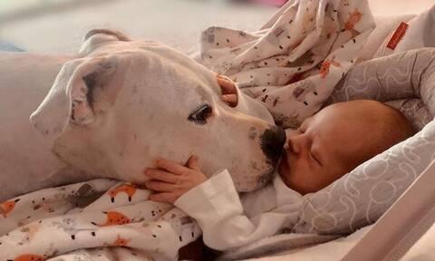 Μωρά & σκυλάκια σε απολαυστικά στιγμιότυπα - Δείτε φωτογραφίες (pics)