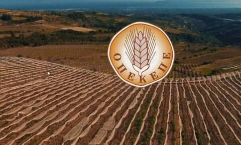 ΟΠΕΚΕΠΕ: Νέα πληρωμή σε δικαιούχους αγρότες - Δείτε ΕΔΩ τα ποσά των δικαιούχων