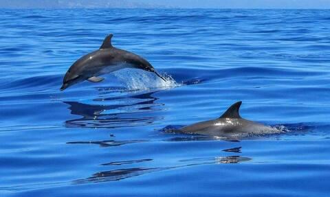 Μεσσηνία: Ο «χορός» των δελφινιών που καθήλωσε τους πάντες (video)