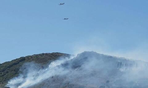 Φωτιά ΤΩΡΑ: Μεγάλη πυρκαγιά στη Ζάκυνθο - Κοντά σε σπίτια οι φλόγες